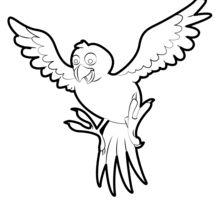 Dibujo para colorear : Pájaro tropical