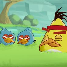 Video : ANGRY BIRD: Entrenamiento militar