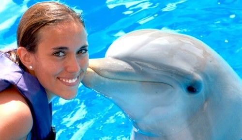 Los delfines para niños