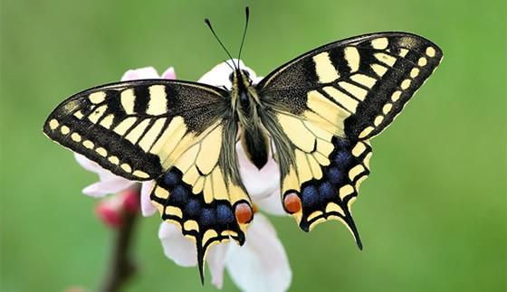 De la oruga a la mariposa