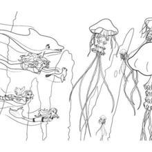 Dibujo para colorear : mundo submarino de OCEANA