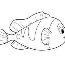 Dibujo para colorear : PEZ de Oceana
