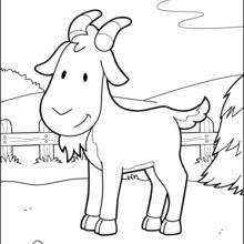 Dibujo para colorear : Cabra en el corral