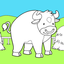 Toro dentro de su Pasto