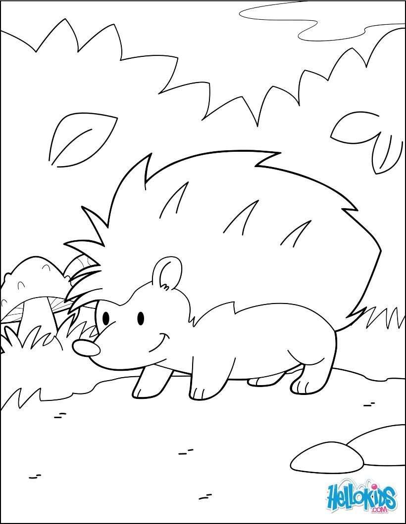 Dibujos para colorear erizo en el bosque - es.hellokids.com