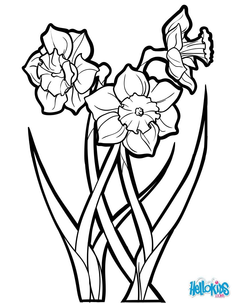 Dibujo para colorear : El Narciso