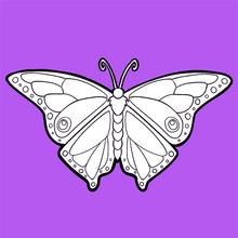Dibujo para colorear : La mariposa