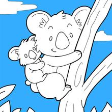 Dibujo para colorear : Koala