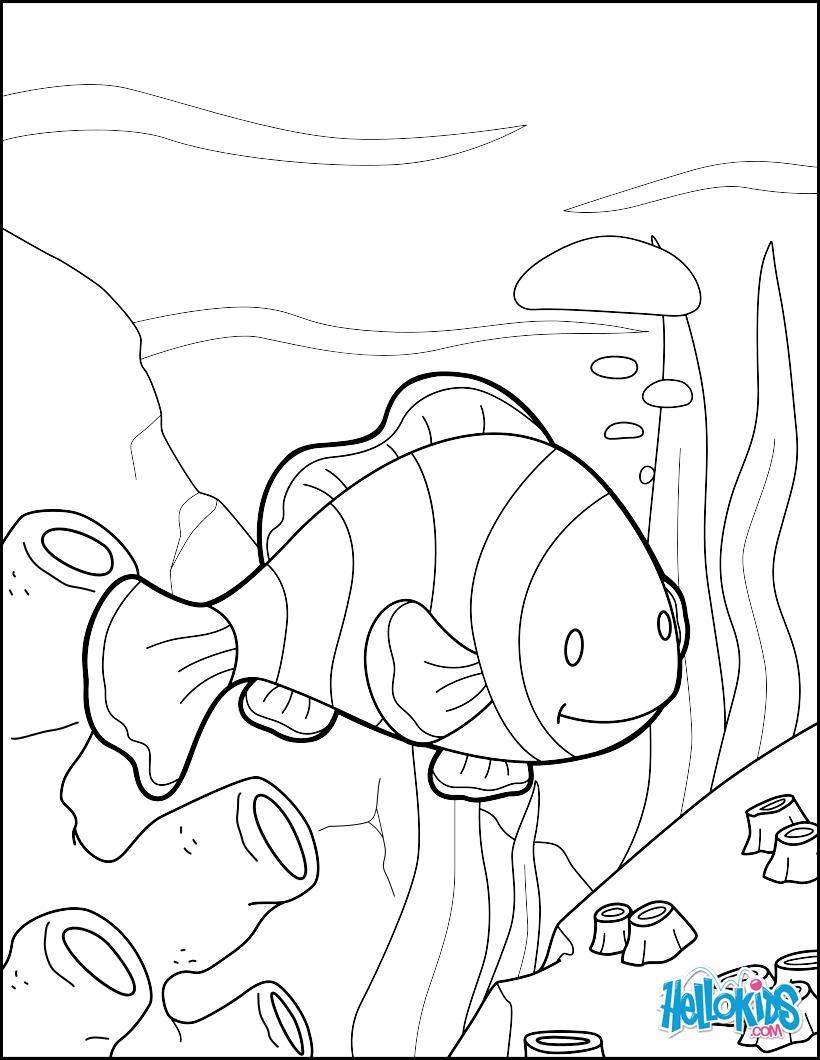 Dibujo para colorear : Pez payaso