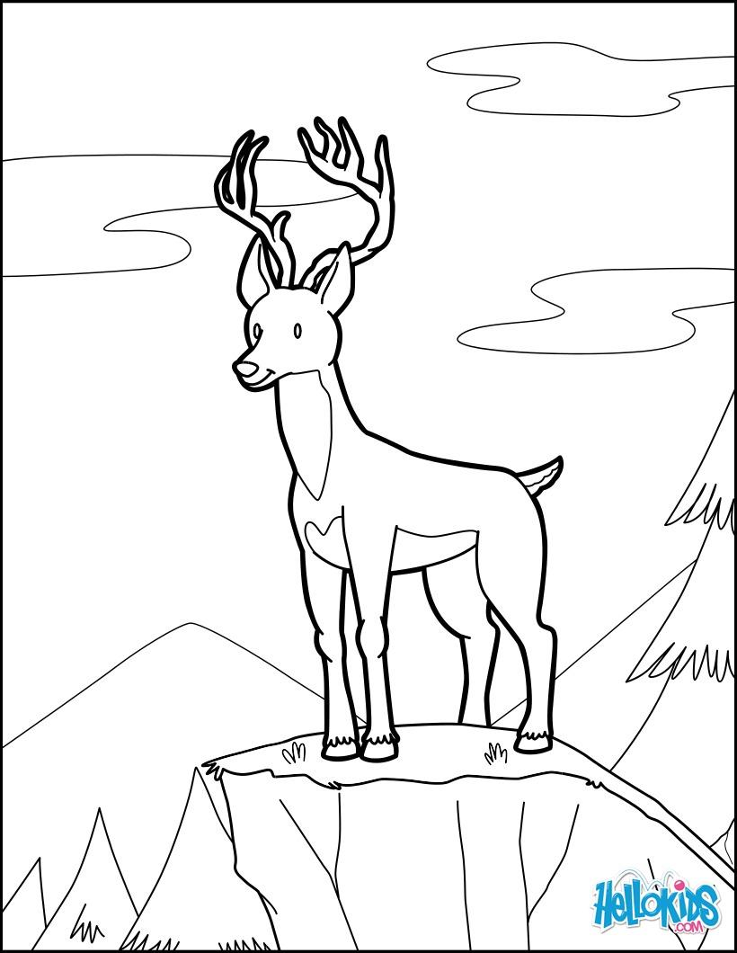 Dibujo para colorear : Ciervo