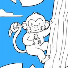 Dibujo para colorear : El Mono