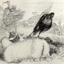 Cuento : El labrador y el águila