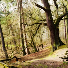 La hermosa en el bosque encantado