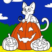 Dibujo para colorear : Gato, Calabaza, Halloween