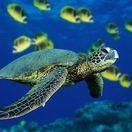 Mundo aquatico
