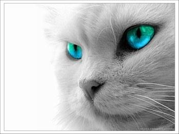 gato triste y azul roberto carlos: