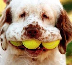 Perros, Razas de Perros, Imágenes de Perros