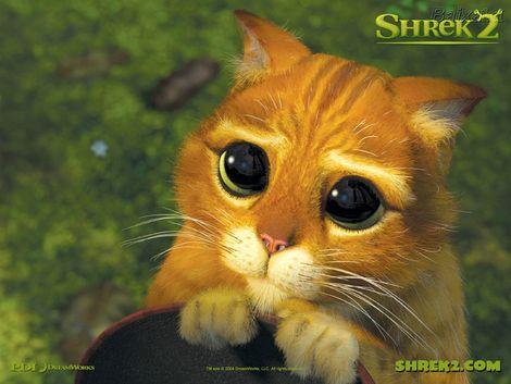 Foto de gatito con ojos tiernos - Imagui