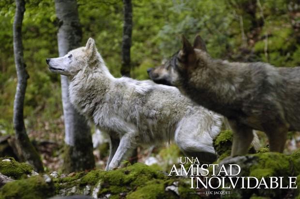 Los lobos salvajes