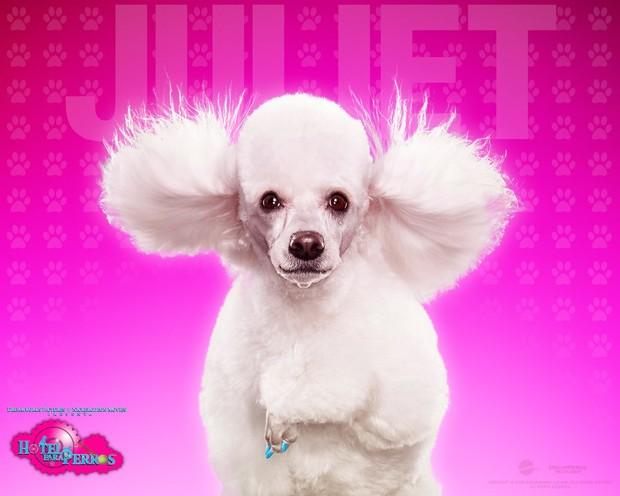 Fondo Hotel para perros: Juliet