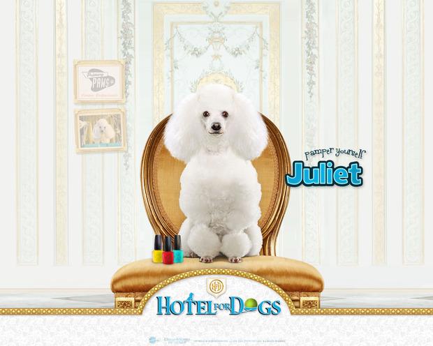 Hotel para perros: Juliet modelo