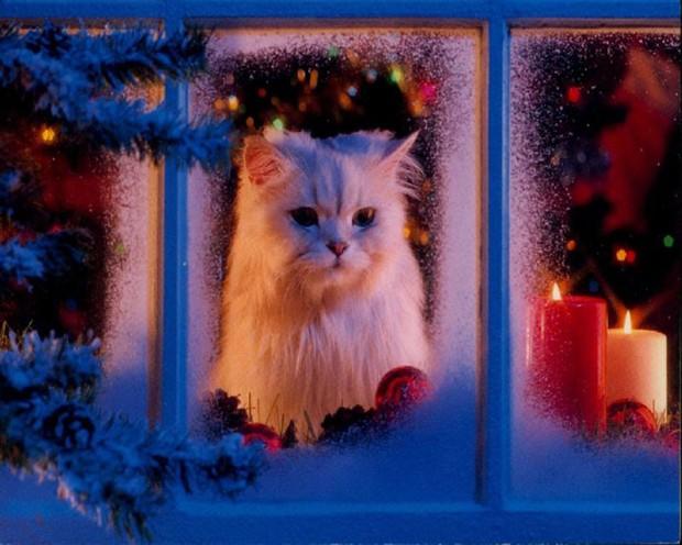 Fondo de Navidad GATO BLANCO