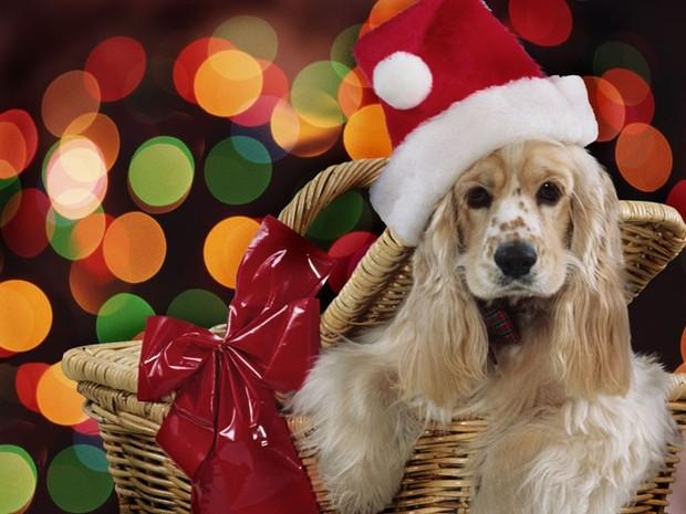 Fondo de Navidad PERRO BEIGE