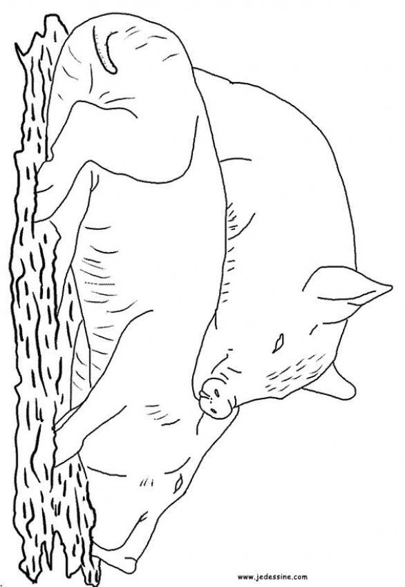 Dibujo para colorear : Dos marranos