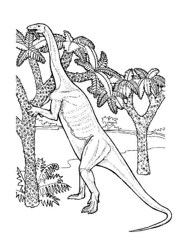 Dibujo para colorear : Tecodontosaurio