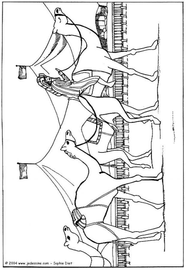 Dibujos para colorear dromedario en fila - es.hellokids.com