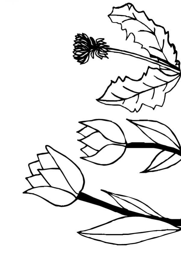 Dibujo para colorear : Flor N°11