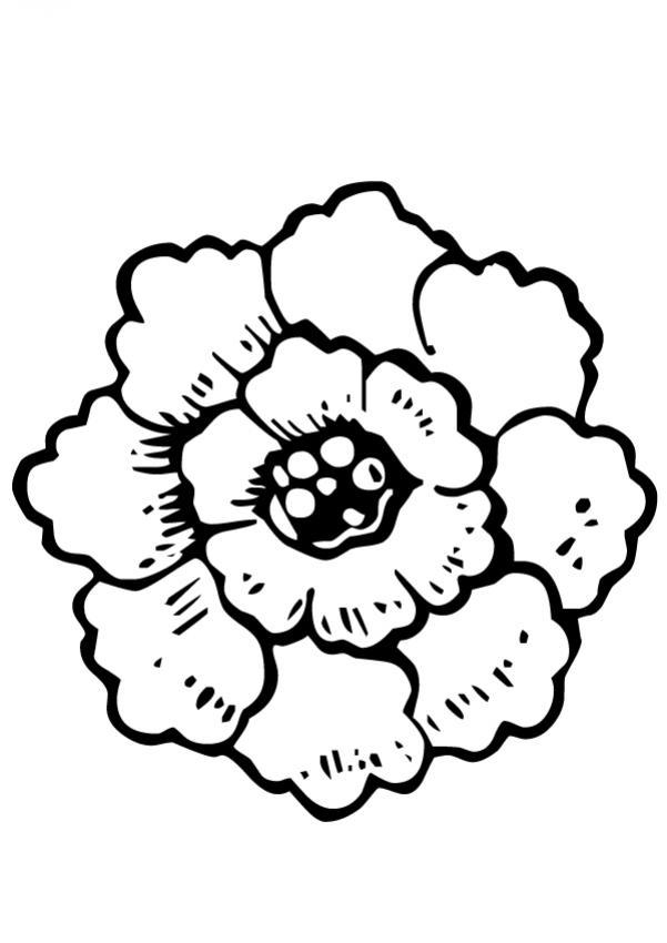 flor-n-18