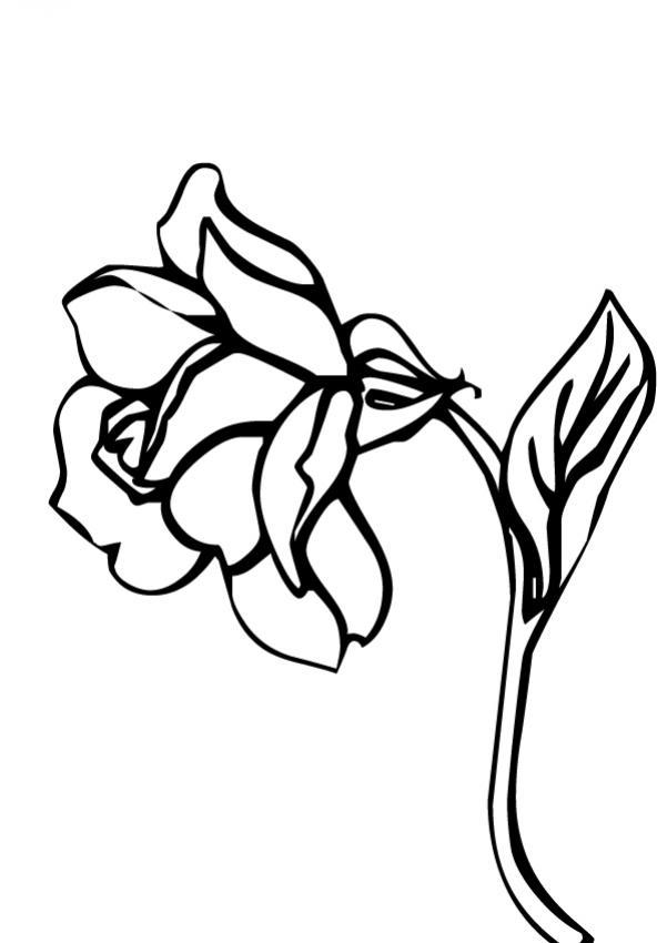 flor-n-19