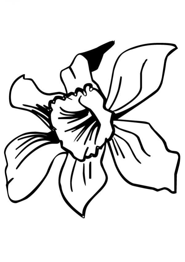 Dibujo para colorear : Flor N°22