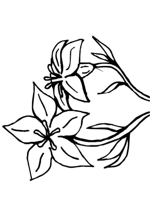 Flor N°9 - Dibujos de FLORES para pintar