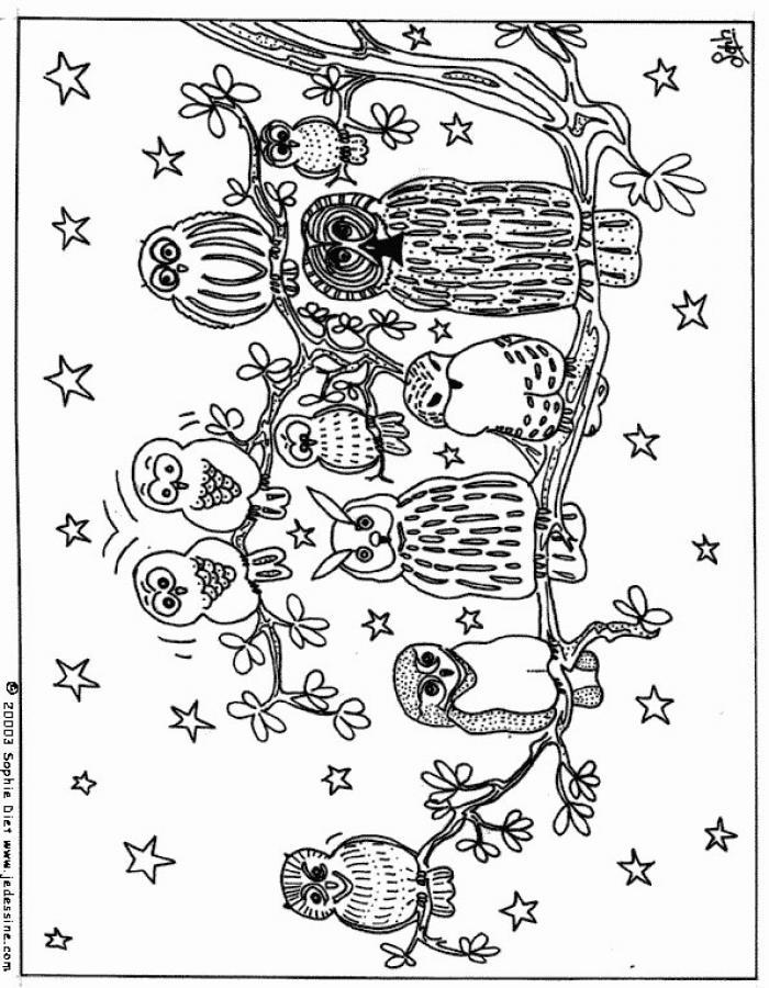 Búhos y lechuzas - Dibujos para colorear BUHO