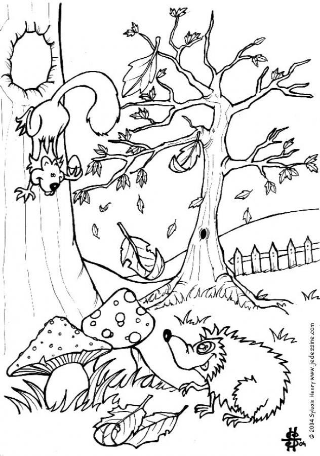 Dibujo para colorear : La ardilla y el erizo