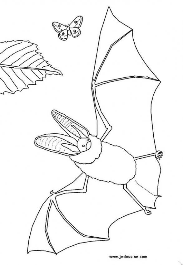 Dibujos para colorear un murci lago - Dibujos de murcielagos para ninos ...