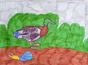 le-canard