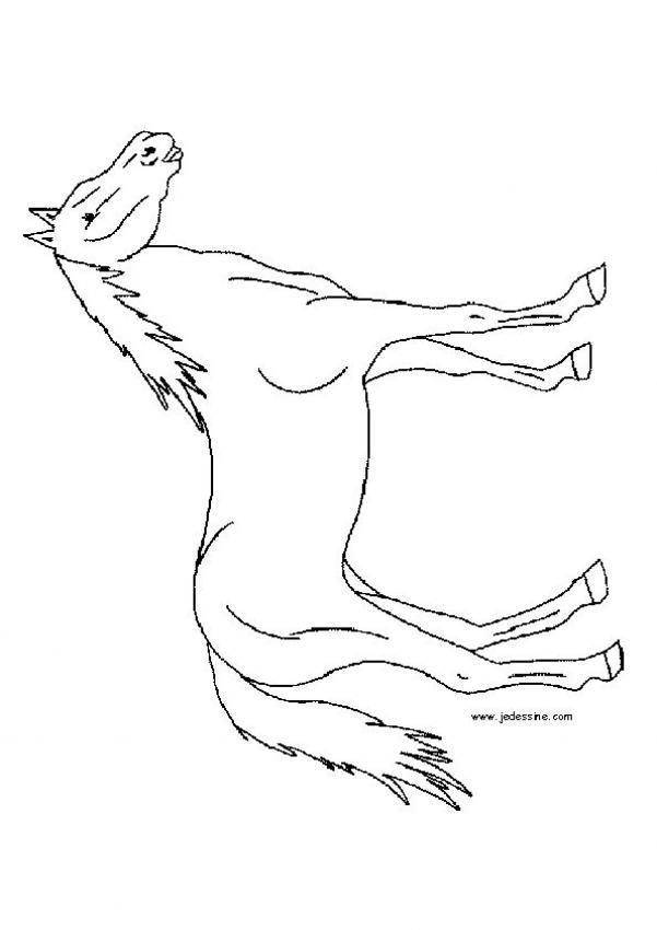 Caballos y yeguas - Archivo de Infojardn