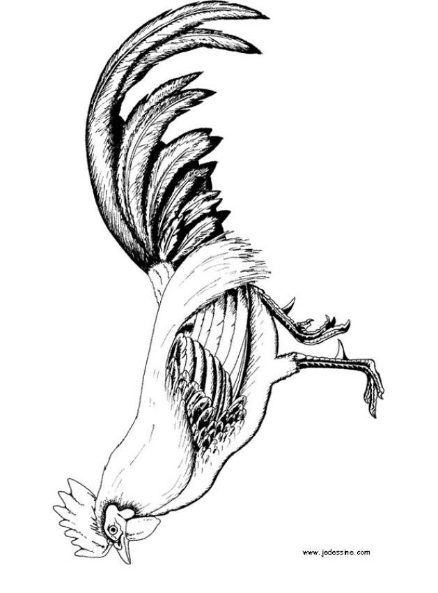 Dibujos para colorear el gallo  eshellokidscom
