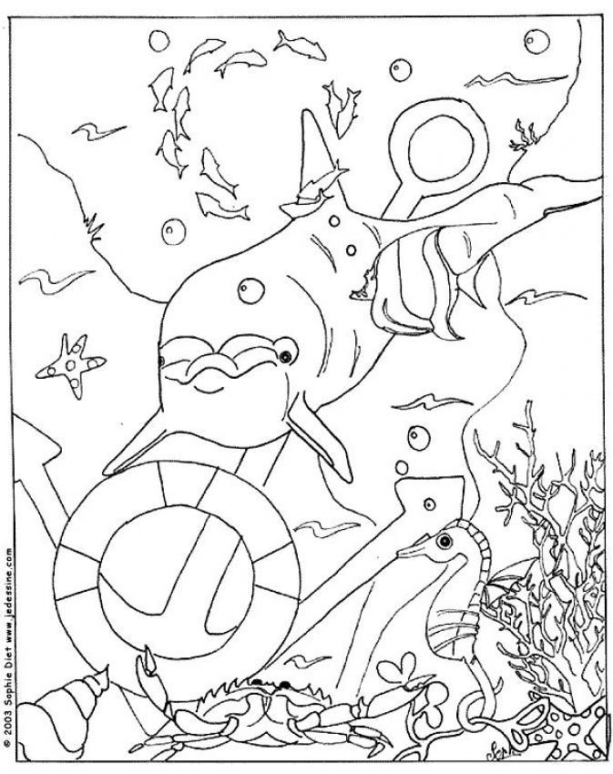 Dibujo para colorear : un delfin con peces