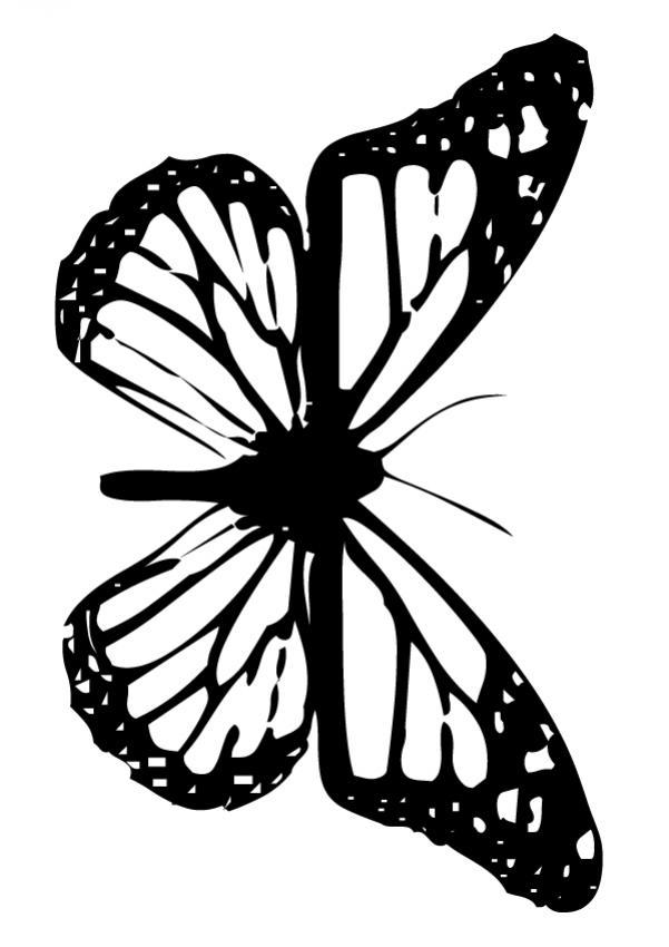 Dibujo de mariposa monarca para colorear - Colorear MARIPOSA MONARCA