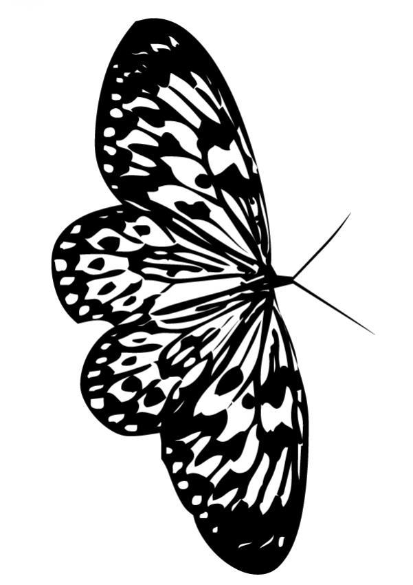 Dibujos para colorear hermosa mariposa monarca  eshellokidscom