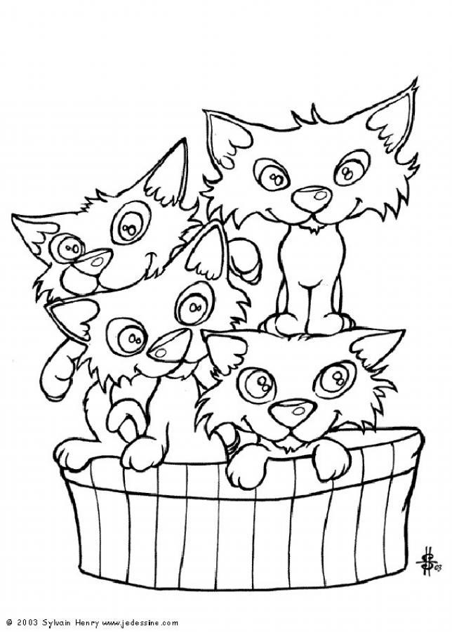 Dibujos para colorear gatito hermoso - es.hellokids.com