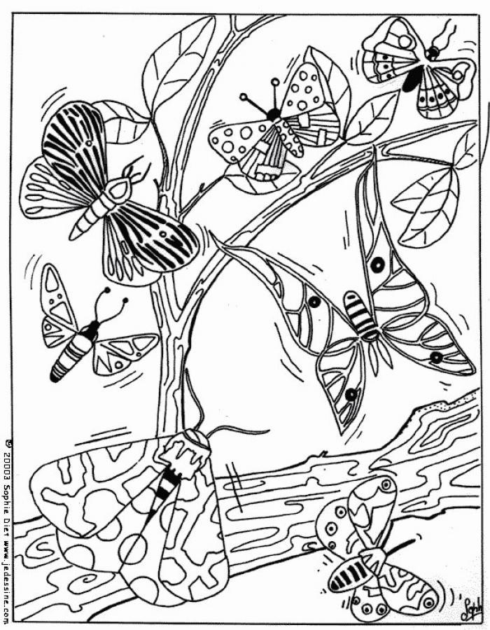 Dibujos para colorear mariposa plantilla sencilla - es.hellokids.com