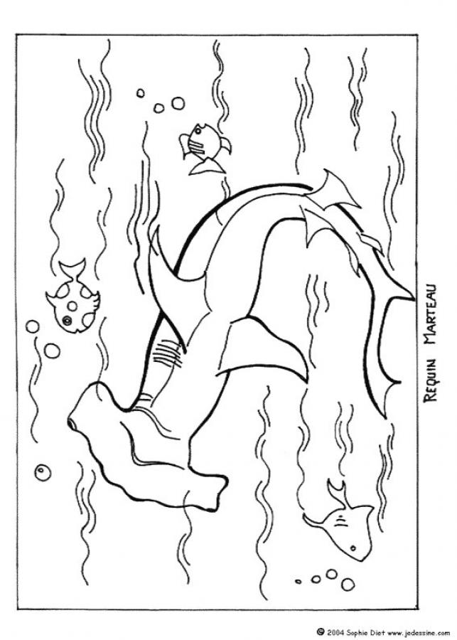 Dibujo para colorear : TIBURON cabeza de Martillo