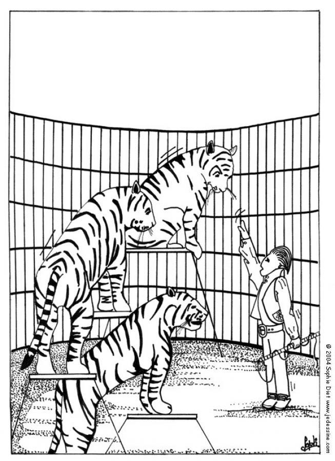 Dibujo para colorear : tigres