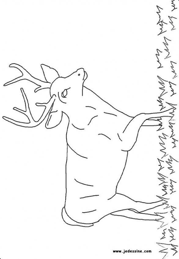 Dibujos ANIMALES DE LA SELVA para colorear - 29 dibujos de animales ...