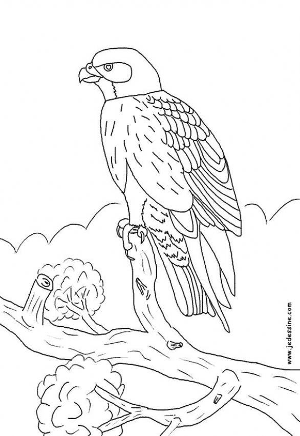 Dibujos de AVES y pájaros - 69 dibujos de animales para colorear y ...